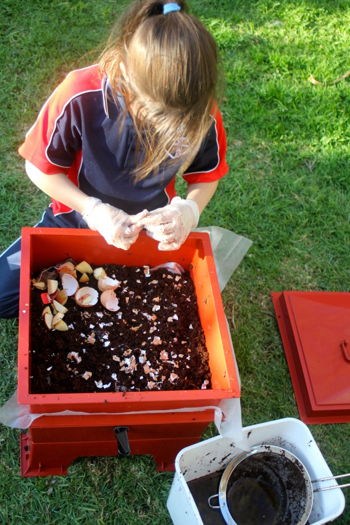 , How to set up a worm farm and how to set up a Compost bin