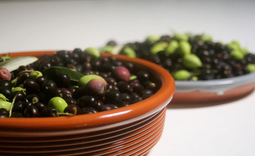 Home grown olives