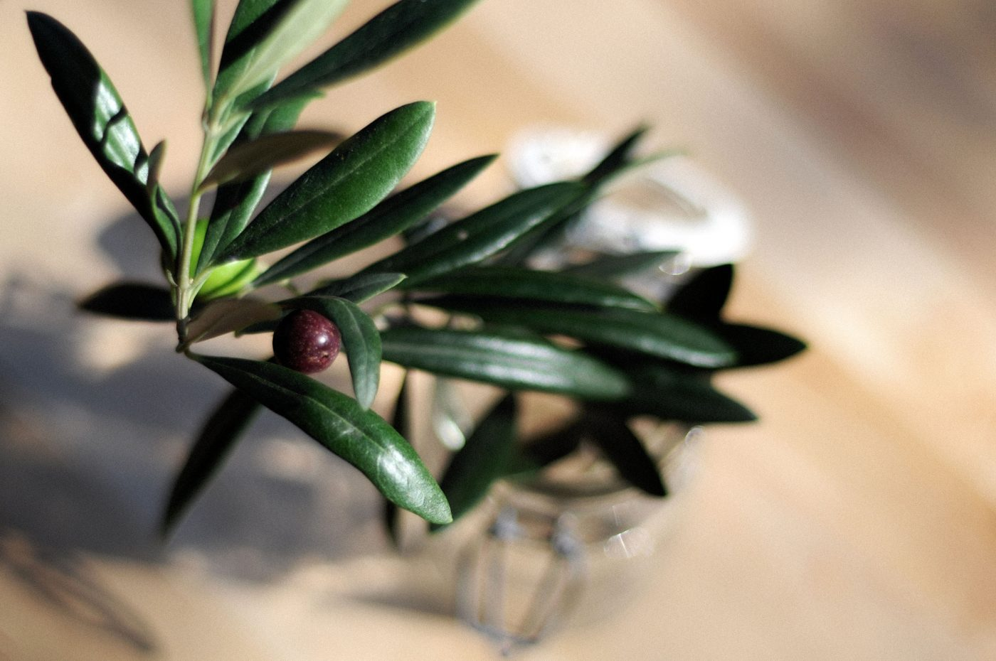 , How to cure your own olives